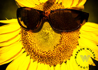 sunflower wears sunshades